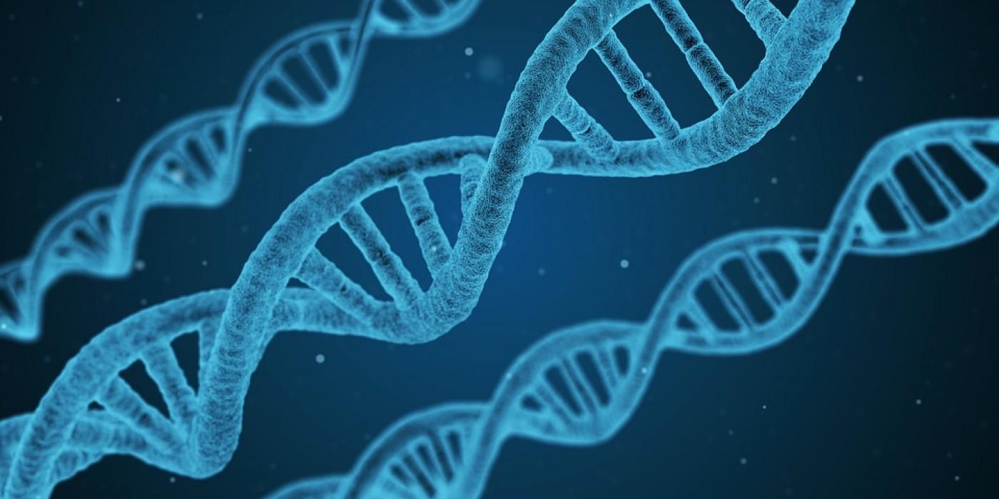 Что такое фрагментация ДНК сперматозоидов и как с ней бороться